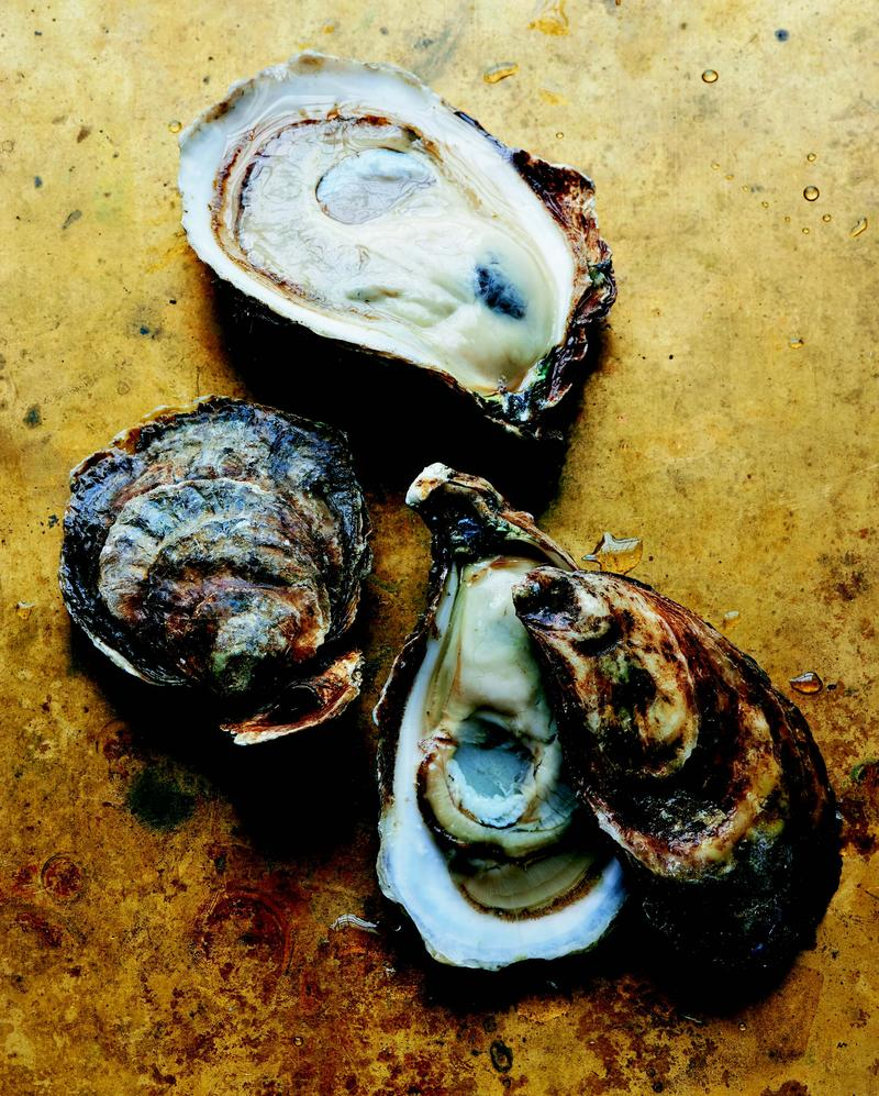 These are Bluepoint oysters, which are the most famous in America. One variety is called Naked Cowboys.