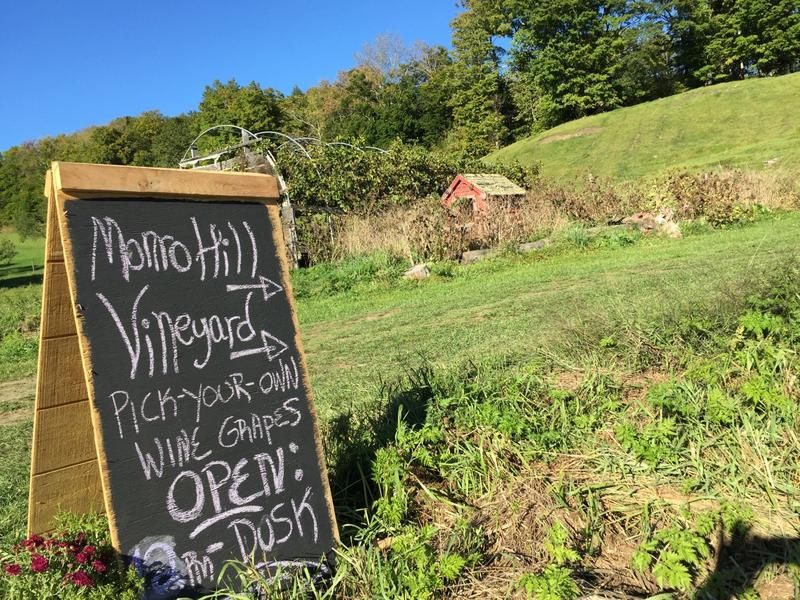 Monro Hill Vineyard began nearly a decade ago as a winemaking business, but this year they're trying out a pick-your-own operation.