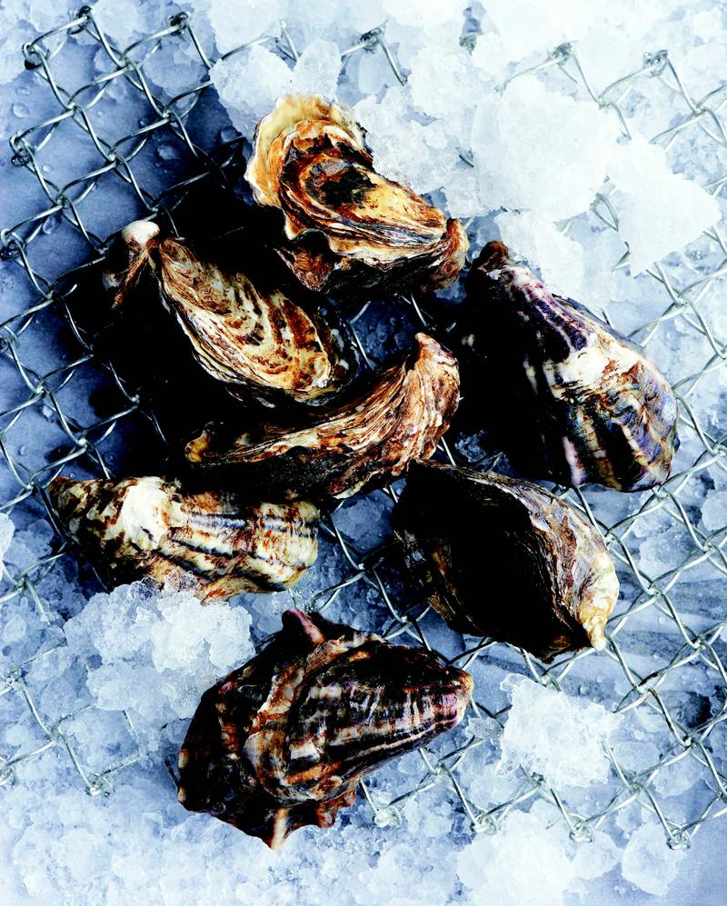 Some have described the flavor of Sea Cow oysters, pictured here, as being sweet like a birthday cake.