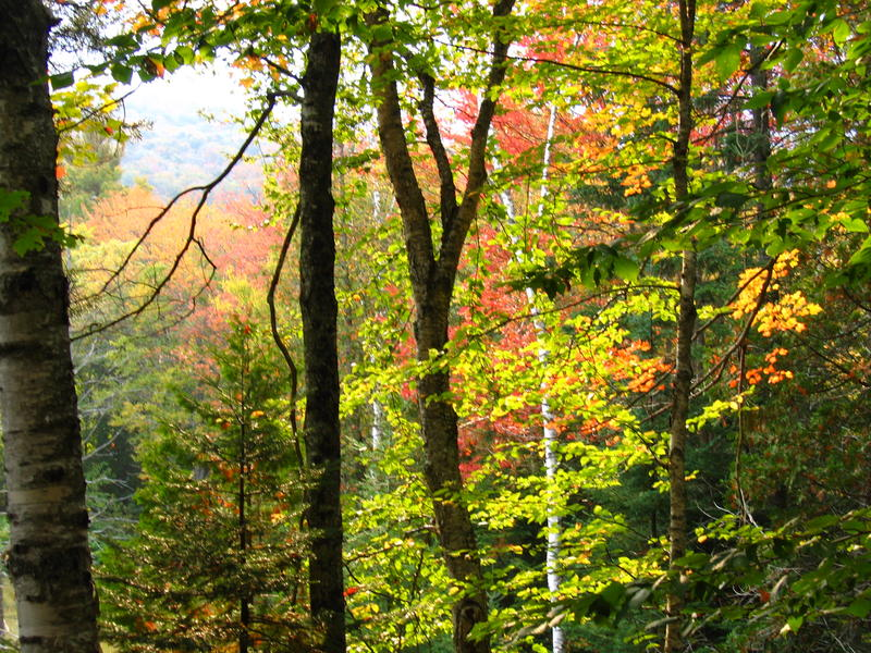 A new regional climate change resolution says maintaining ecological connectivity is an important strategy to slow climate change. Forests like the Willoughby State Forest, pictured here, serve as habitats for wildlife.