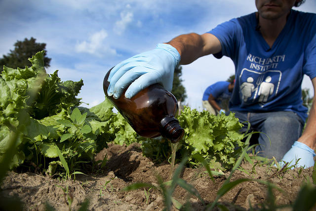 Abe Noe-Hays, the research director at the Rich Earth Institute, applies urine as a side dressing to lettuce plots for EPA-funded study. The institute has been awarded $830,000 to continue its study of human urine as a possible fertilizer.
