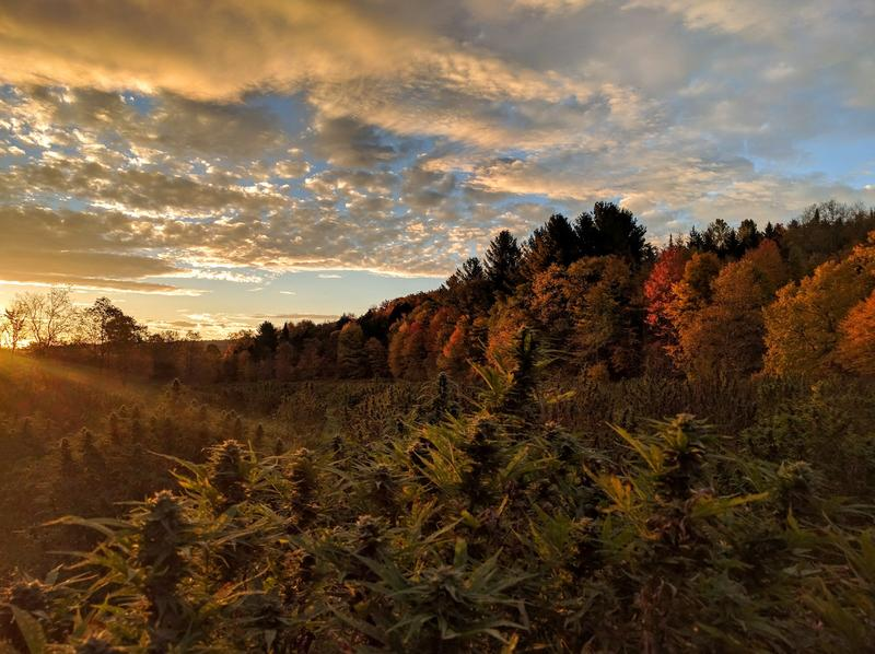 Evergreen Capital Management, an investment group which includes the founders of Gardener's Supply Company, Seventh Generation and Magic Hat Brewing, has invested $250,000 in a hemp farm in Hardwick.