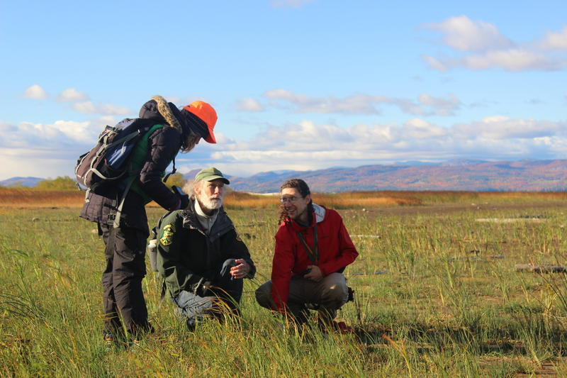 Vermont Fish and Wildlife biologists examine a cluster of Wright's Spikerush plants, which only grow after extended dry conditions. Emma Stuhl, Bob Popp and Aaron Marcus, left to right, are on a sandy beach that would normally be underwater.