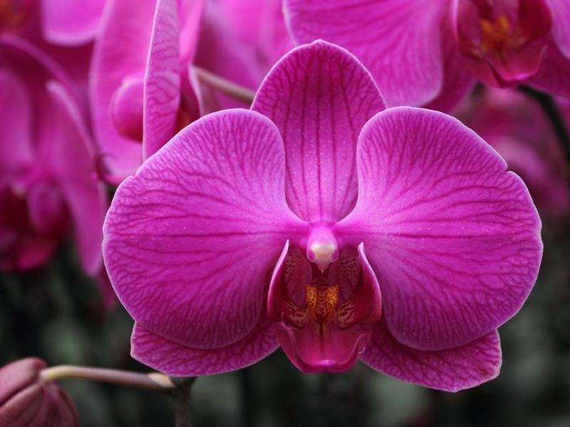 vermont garden journal get your orchids to bloom again vermont