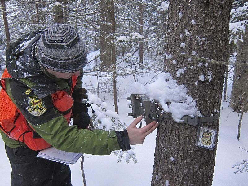 Chris Bernier of the Vermont Fish And Wildlife Department checks a camera trap at the Victory Basin Wildlife Management Area.