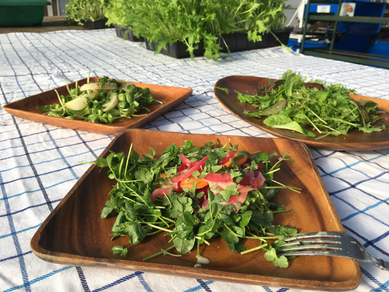 Fresh greens are becoming more readily available during winter like those grown at Red Wagon Plants in Hinesburg, VT.