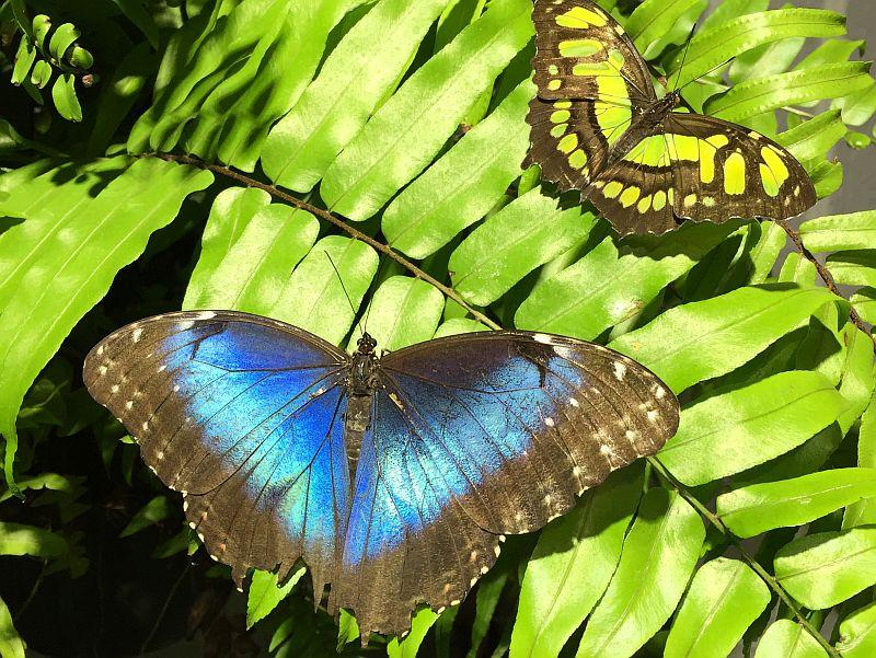 Butterflies move their scaly wings in a figure-eight pattern, cutting and swirling the air, to take flight.
