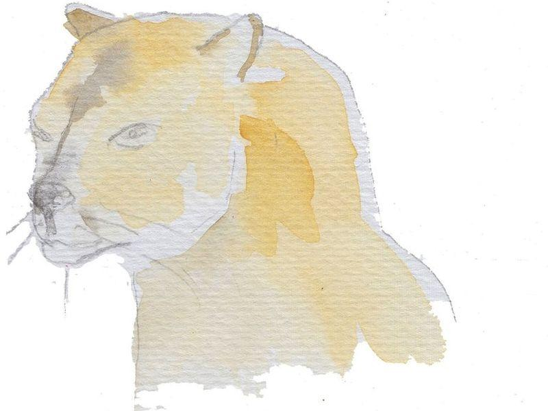Sarah Van Arsdale used pen and watercolor to paint her illustrations that accompany her book-length poem, 'The Catamount.'