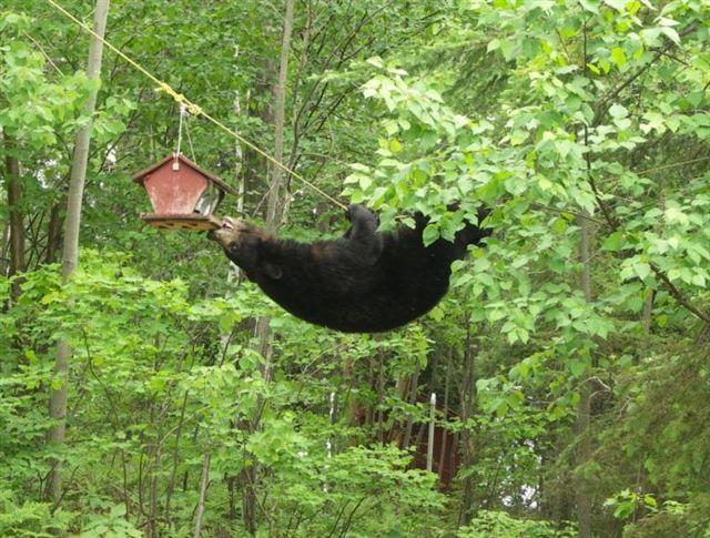 "A recent press release from Vermont Fish and Wildlife Department recommends removing birdfeeders, as bears are commonly attracted to them. On ""Vermont Edition,"" we hear more tips for avoiding human-bear interactions."