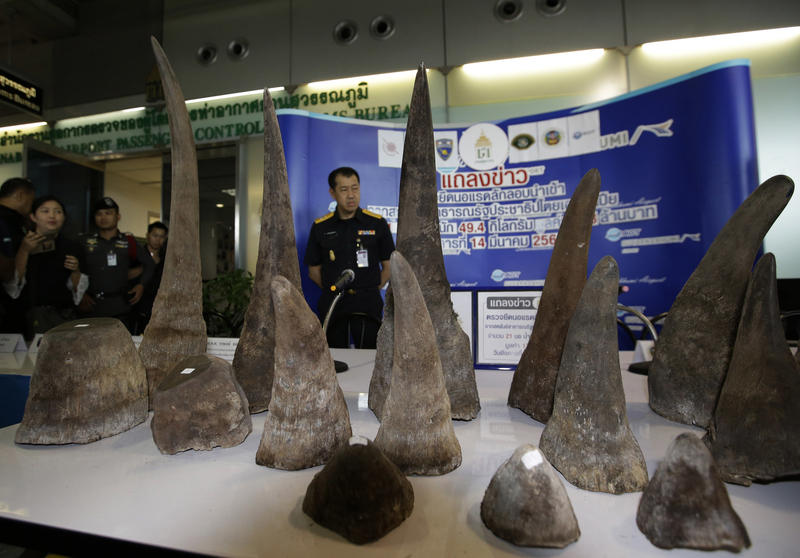 A table displays rhino horns seized by Thai Customs officials at a press conference at the Suvarnabhumi Airport in Bangkok, Thailand on March 14.