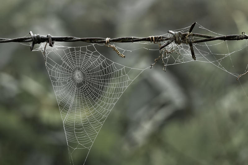 Spider web on a piece of barbed wire.