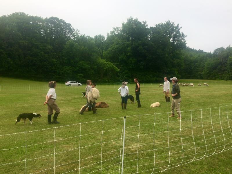 "The players of ""Doggie Hamlet"" rehearse in a field near Dartmouth College. They premiere the show Thursday, June 29 on the Dartmouth Green."