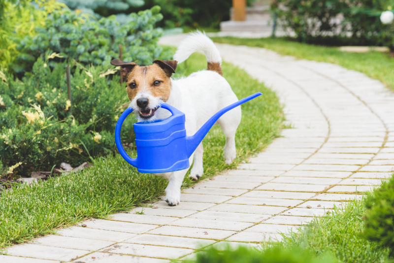 Training can go a long way when teaching your dog to stay out of the garden.