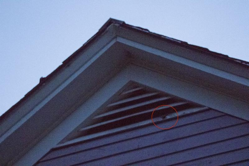 The red circle identifies a Little Brown Bat exiting the attic to forage in the darkness.