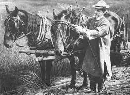 President Calvin Coolidge tending draft horses while wearing the frock his grandfather had worn for chores around the homeplace in Plymouth Notch.