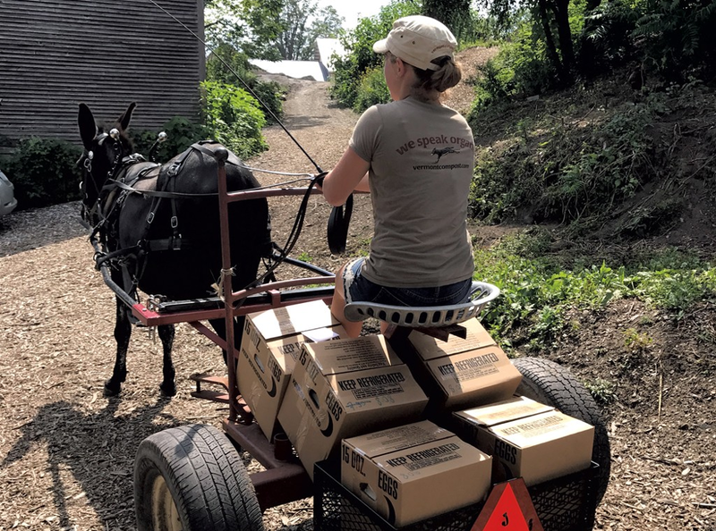 Vermont Compost teamster, Kaleigh Hamal, and Ruby the donkey deliver eggs through Montpelier.
