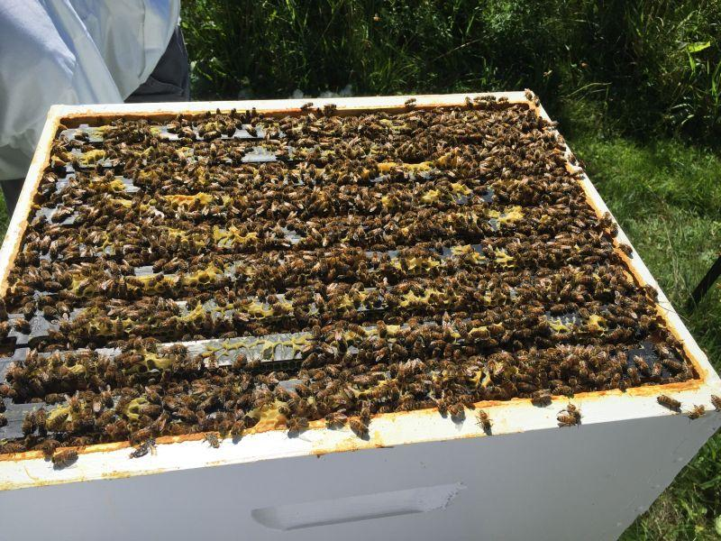 Beekeepers use wooden boxes with multiple frames to hold a colony of bees.