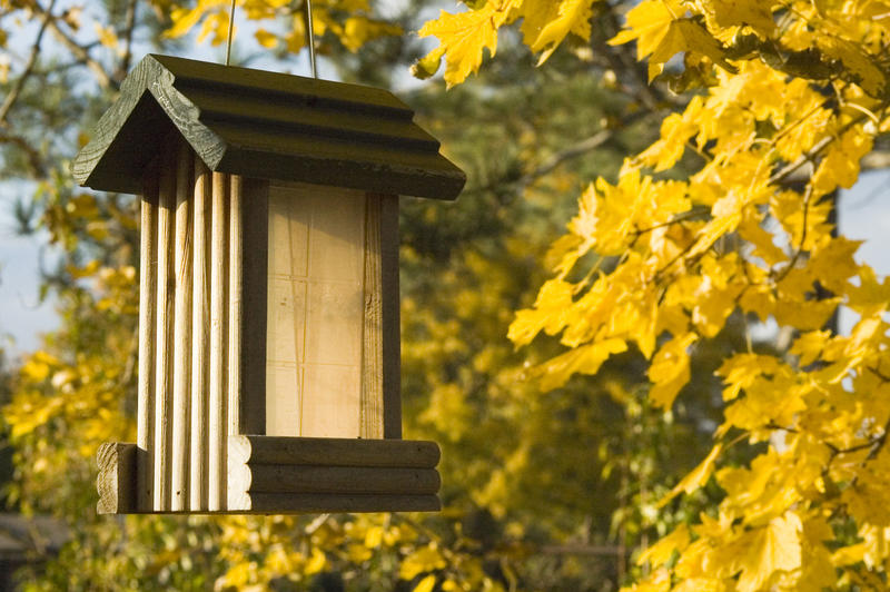 Now that autumn is here, it's time for the fall bird show. One thing we'll talk about is why some people are worried that they  haven't been seeing as much activity at their birdfeeders this year.