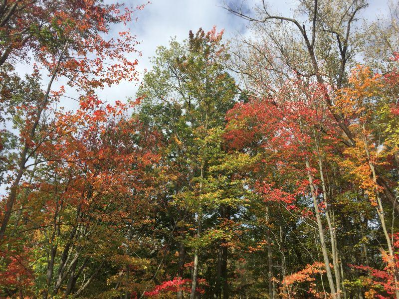Fall foliage has only just arrived in western Vermont.