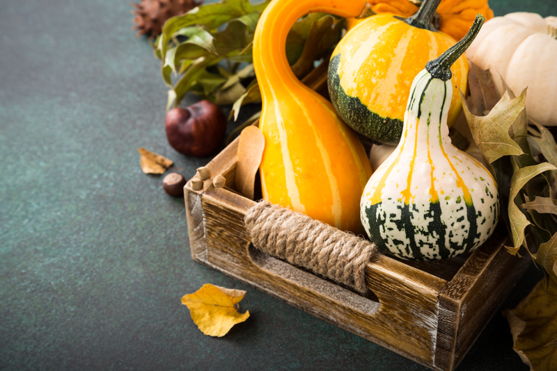 After drying properly, hard-shelled gourds have a multitude of uses and will last for years.