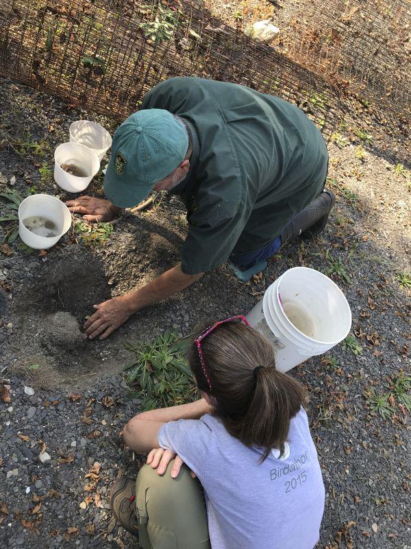 Biologist Steve Perron is excavating a turtle nest as Sara Zahendra looks on.