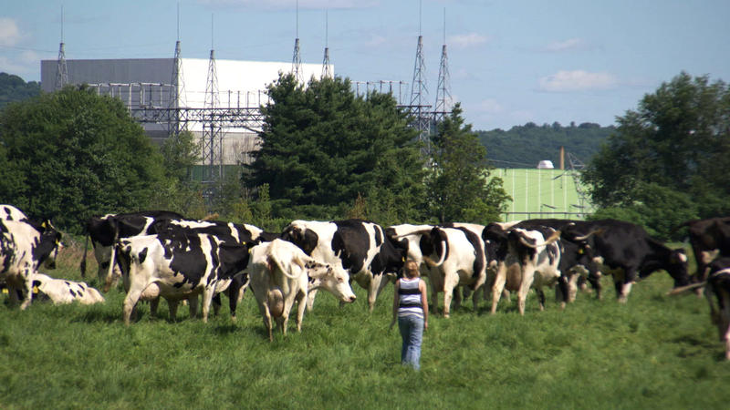 "A pasture full of cows overlooks the Vermont Yankee nuclear power plant in Vernon, Vt. Robbie Leppzer's film ""Power Struggle"" documents efforts to close Vermont Yankee; the plant was closed in 2014."