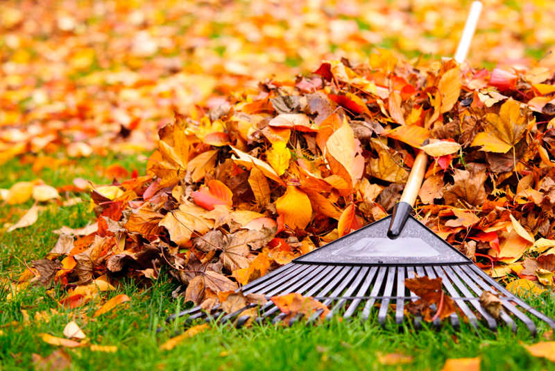 Autumn leaves left on the lawn can support better growth in the coming year and can also be used as winter mulch around certain vegetation.