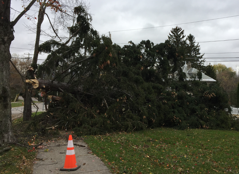 Many trees in Vermont, like this one in Middlebury, were damaged or uprooted from wind and rain during a late October 2017 storm.
