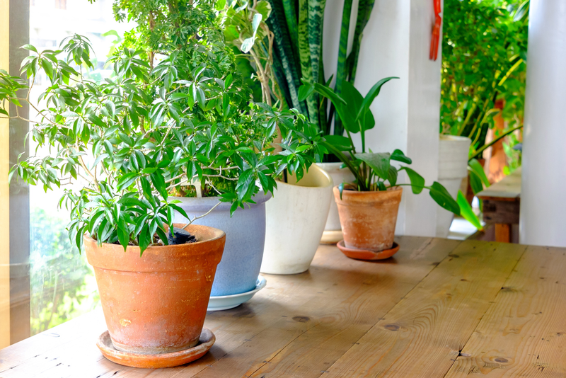Now that outdoor gardening is done for the season, it's time to move inside and focus on houseplants.