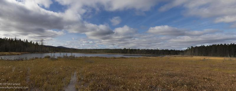 The biologists from the Vermont Center For Ecostudies visited Moose Bog, north of Island Pond, for this edition of Outdoor Radio.