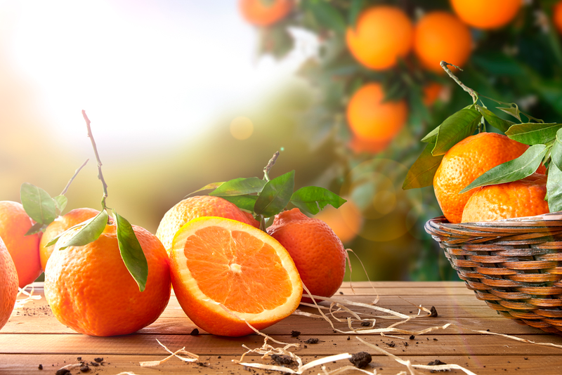 Oranges and other citrus fruit can be grown indoors in colder climates by using certain dwarf varieties and creating proper conditions.