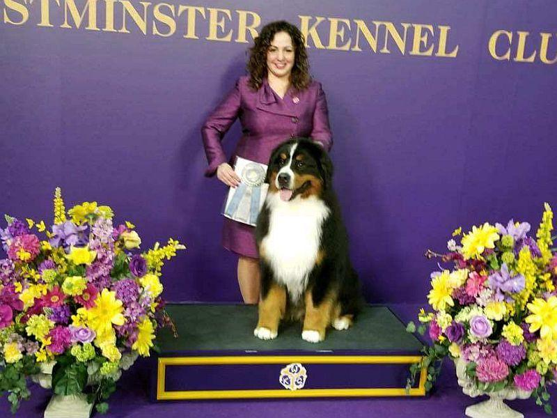 Handler Lisa Gallizzo displays Romeo's Select Dog award at the Westminster Dog Show.