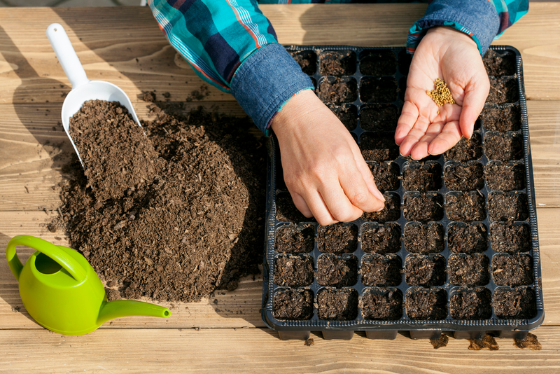 When starting seeds indoors, open trays are good for large quantities while cell trays are best for smaller amounts.
