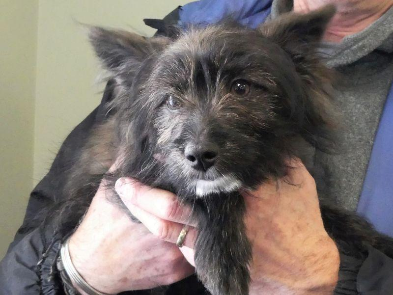 A puppy seized in an animal cruelty case will be adopted by a foster family after being surrendered to Homeward Bound, Addison County's Humane Society.