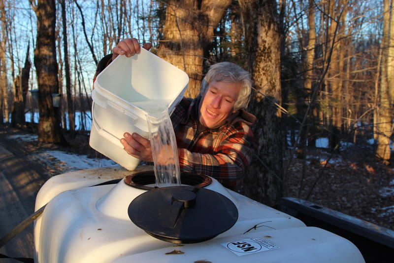 Bob Sabolefski, a small batch syrup producer in Stowe, pours sap from one bucket to another in the woods.