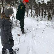 On a recent trek, the Center for Ecostudies' Sarah Zahendra and Jake Debow look at moose tracks in the deep snow near Maidstone Lake.