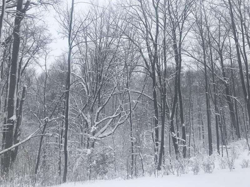 A scene of snowy trees.