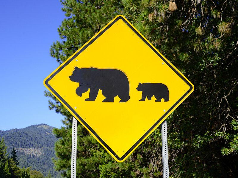 With the Vermont black bear population up, bear sightings have doubled since last year.