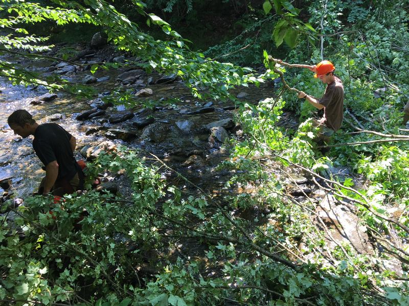 To improve habitat on Calavale Brook, first you have to drop some trees in the stream.