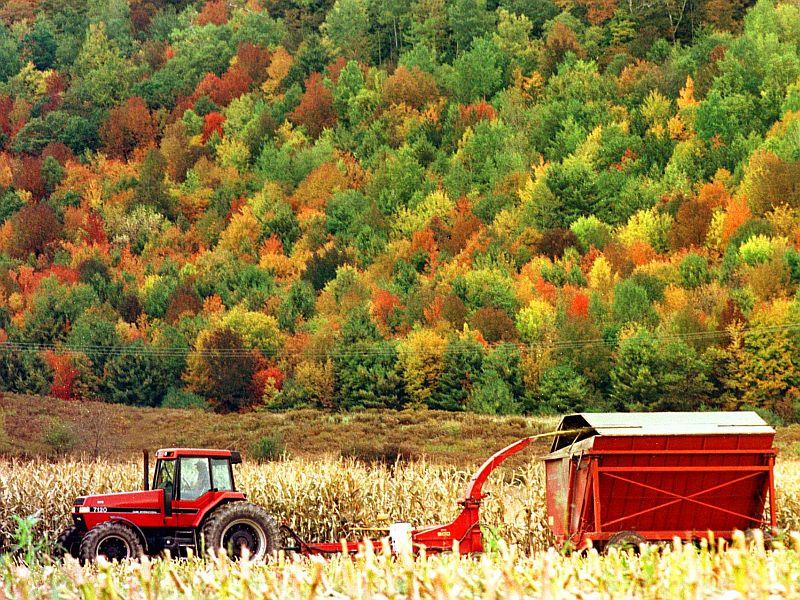 Vermont's current use program allows working forest and agricultrual land to be taxed at a much lower rate.