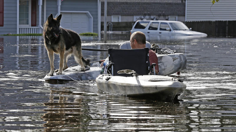 Media reports were full of pictures of animals being rescued from Florence's floodwaters.