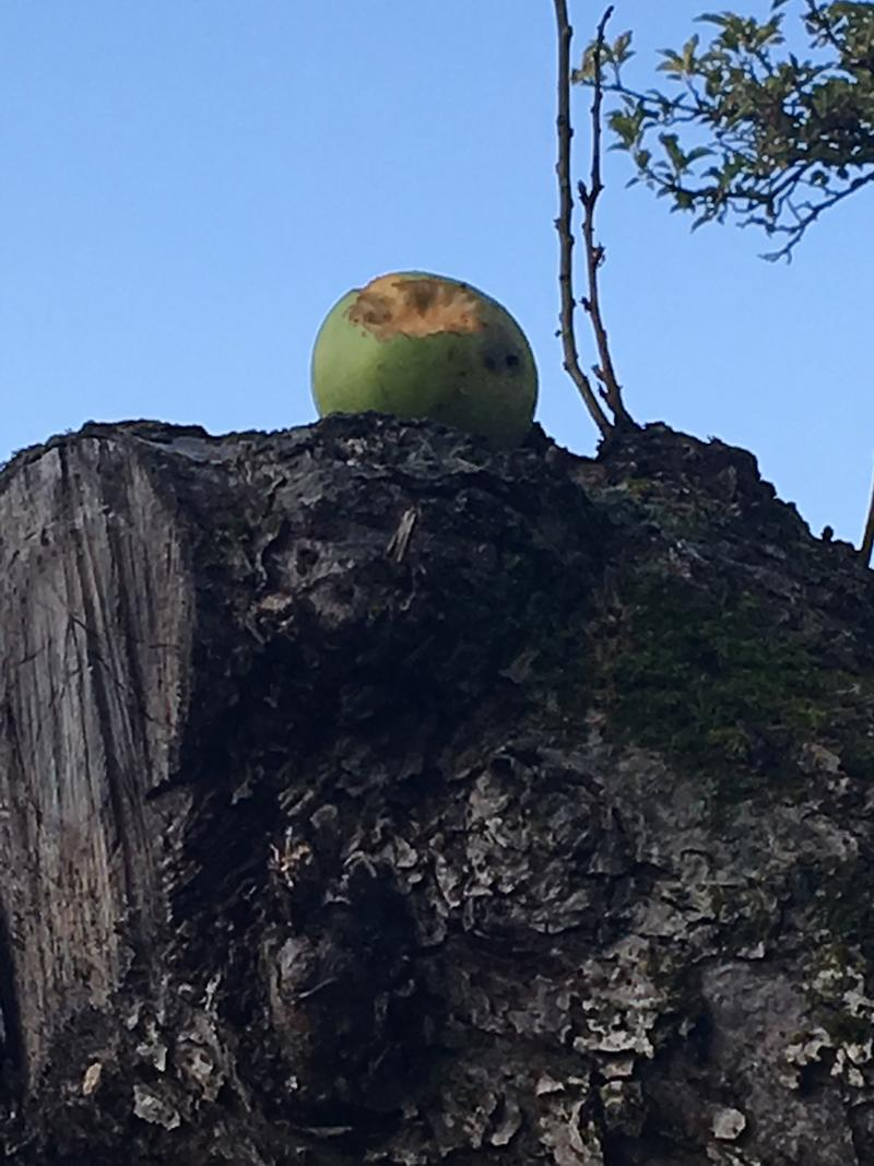 """""""In most cases, that destination turns out to be a broad, flat branch on the tree that has no fruit."""""""