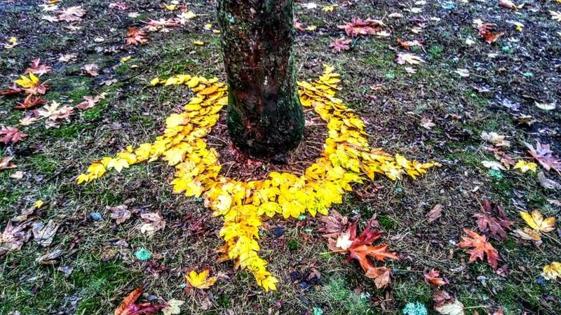 VPR listener Margaret Sisco Fraser formed a golden ring of leaves around this tree in Johnson.