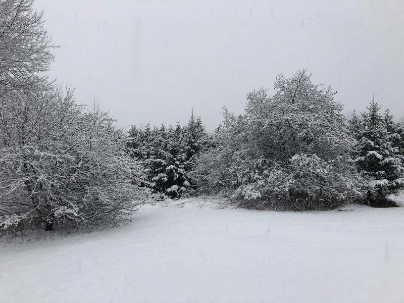 Snow covered ground and trees in Vermont.