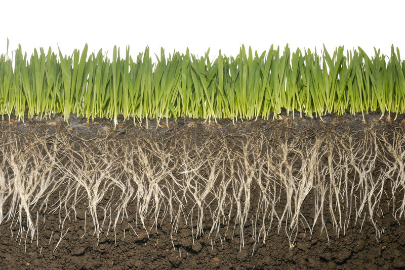 Soils hold at least three times the amount of carbon as the atmosphere, and play a key role in managing carbon and mitigating climate change.