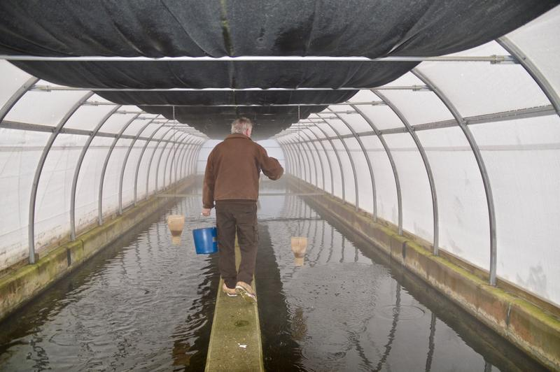 Henry Bouchard feeds brook trout at the Dwight D. Eisenhower National Fish Hatchery in North Chittenden.