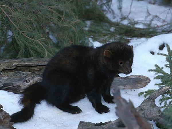 The Truth About Fishers | Vermont Public Radio