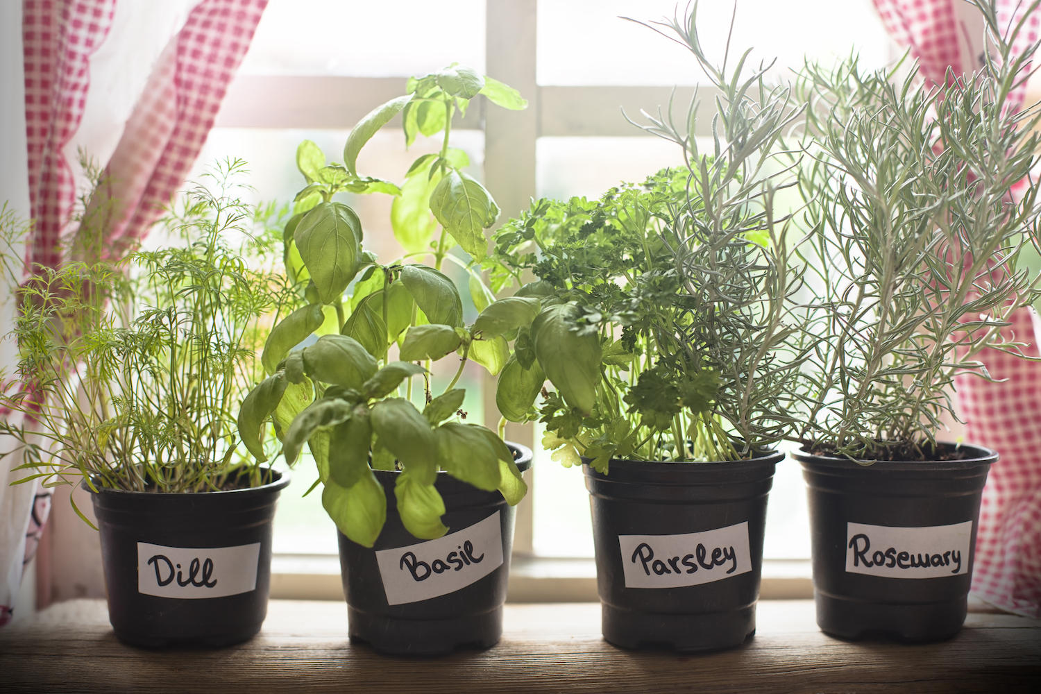 Vermont garden journal 6 tips for starting a windowsill herb garden if youre a fan of gardening you might have been gifted seeds this workwithnaturefo