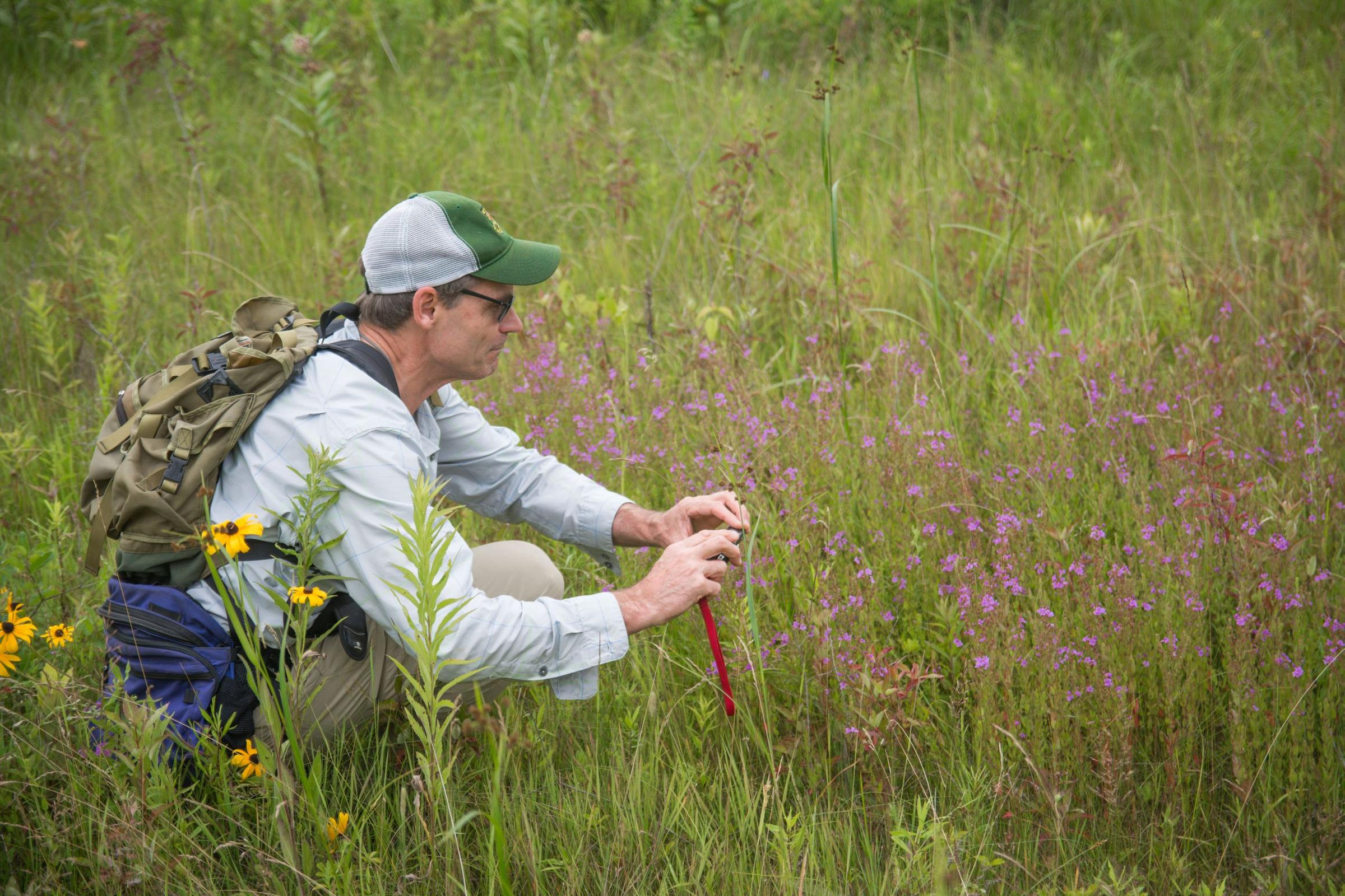 Rare flower thought extinct in vermont rediscovered for Vermont fish and wildlife jobs