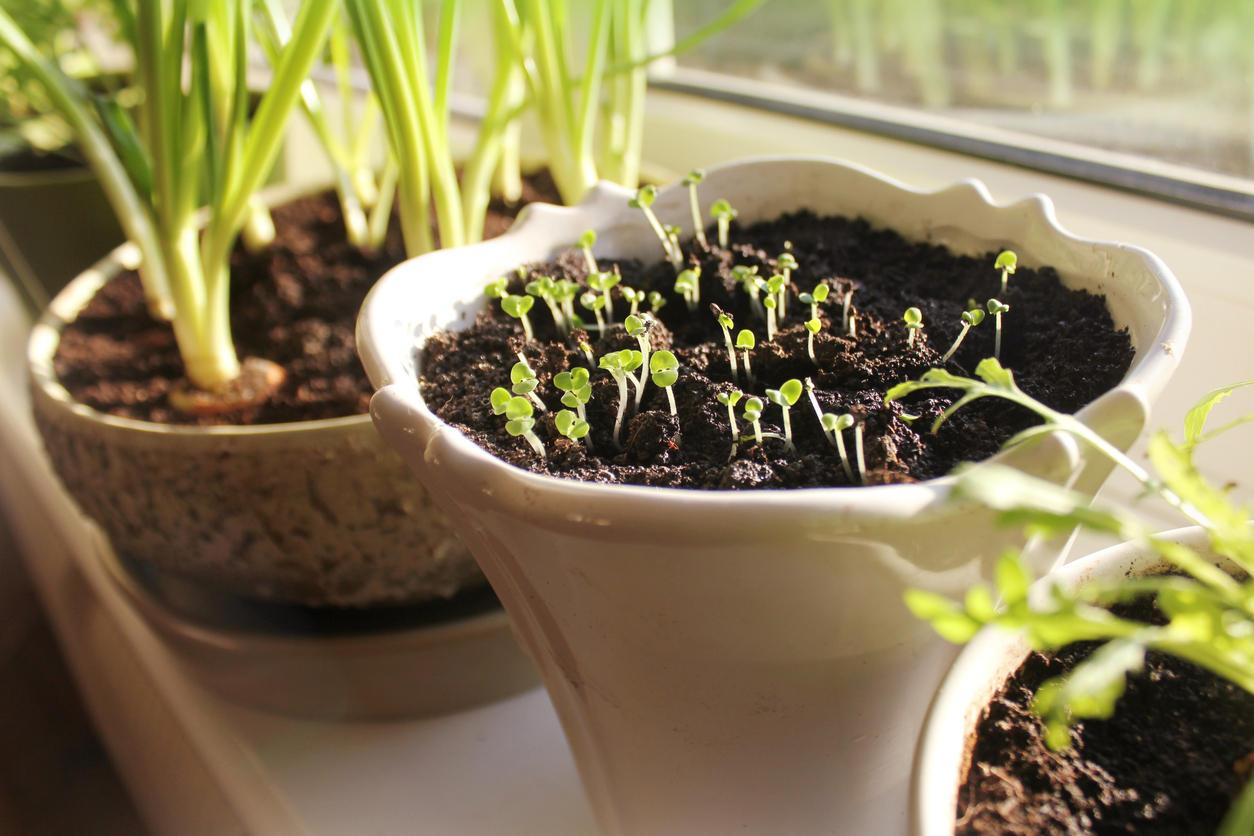 Vermont Garden Journal: Seed-Starting Problem-Solving | Vermont ...